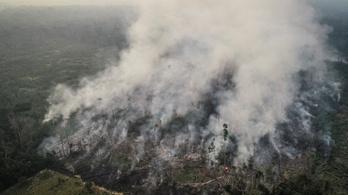 Négyszer annyi erdőtűz pusztít az Amazonas vidékén, mint tavaly