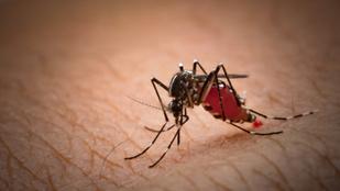 Megvan a szuperanyag, ami tökéletes védelmet jelenthet a szúnyogok ellen
