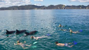 A delfinek belehalnak a túl nagy emberi szeretetbe
