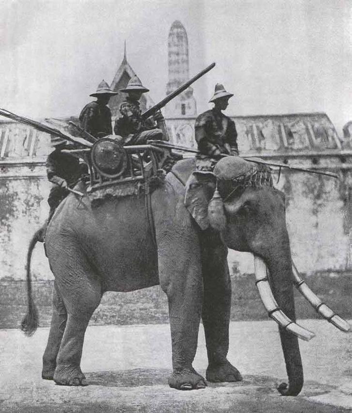 Harci elefánt a 19. századi Sziámban