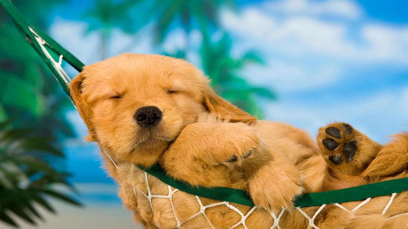 Rájöttek a tudósok, miről álmodnak a kutyák: hihetetlenül cuki a válasz