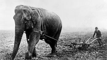 Lincoln elnökön múlt, hogy ma nem élnek Amerikában vadon elefántok
