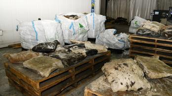 Jelentős hiány lesz a brit kokainpiacon