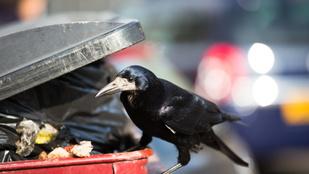 A madarak is szeretik a gyorskaját, hát ők is kinyírják magukat vele
