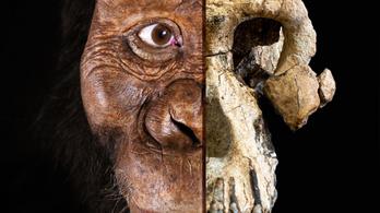 Egy 3,8 millió éves koponya írhatja át az emberi evolúció történetét