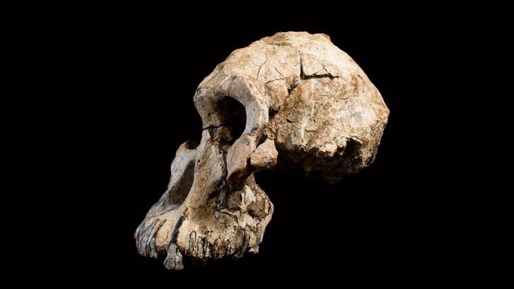 A koponyát még 2016-ban találták Etiópiában