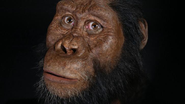 A koponya alapján rekonstruált Australopithecus anamensis