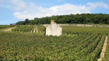 Burgundi borok mutatják a klímaváltozást