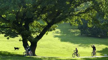 Tarlós külföldről is a budapesti fákat védi