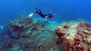 Hivatalosan is nagyon rosszak a Nagy-korallzátony kilátásai