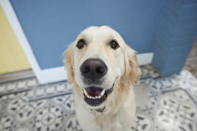boldog kutya cover