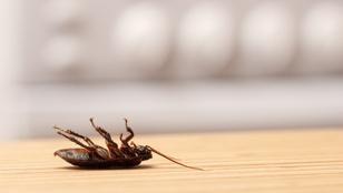 Ezért találod a hátukon fekve a döglött bogarakat