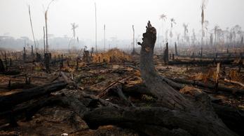 A Vans és más ismert márkák is lecserélik a brazil bőrt az esőerdők védelmében
