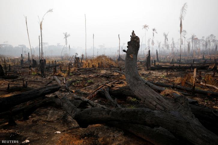 Leégett Amazonas dzsungel egy része a brazíliai Boca do Acreban 2019. augusztus 24-én