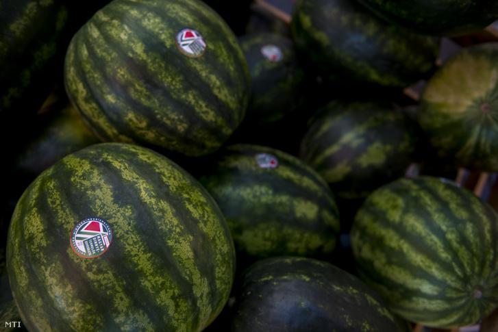 A Magyar Dinnyetermelők Egyesületének matricájával ellátott görögdinnyék az ormánsági dinnyét népszerűsítő kóstolón a pécsi Kossuth téren 2019. július 19-én