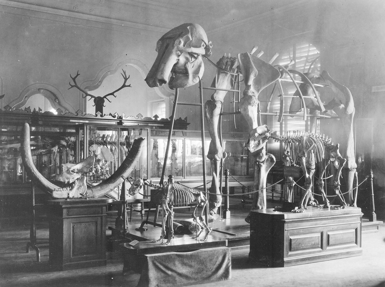 A Földtani Intézet múzeumának kiállítása az 1900-as évek elején. A múzeum 1900-ban nyitotta meg kapuit a nagyközönség előtt, egyik legelső látogatója maga Ferencz József volt, aki az épület átadásakor tekintette meg a kiállítást. A korabeli lapok megemlékeztek róla, hogy a király a tervezett negyedóra helyett háromnegyed órát töltött az intézetben, annyira érdekelte őt a tárlat.