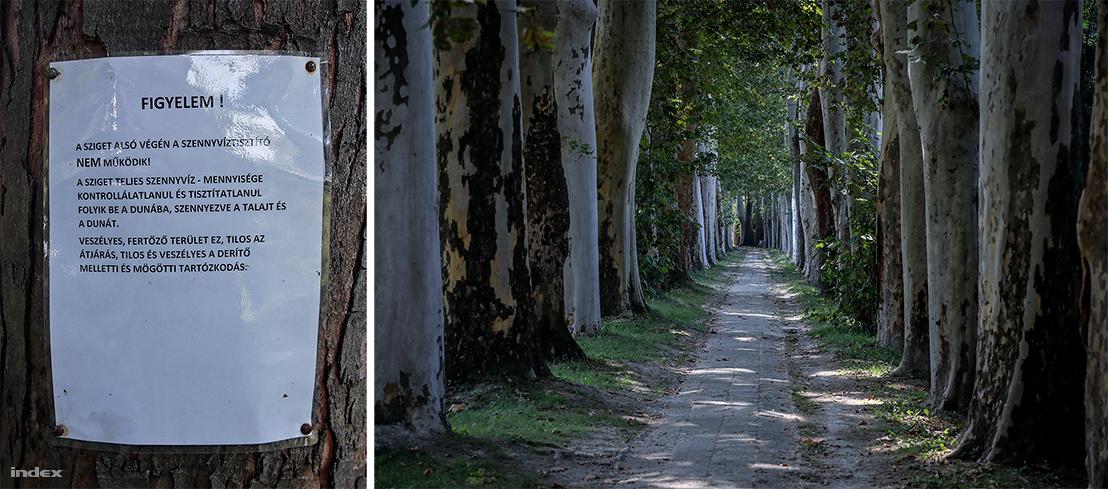 Bal: Tábla figyelmeztet arra, hogy az ülepítő nem működik és a szennyvíz kontrollálhatatlanul folyik bele a Dunába. - Jobb: A platánok gyökerei a vízvezeték-rendszer ósdi csöveit kezdhették ki.