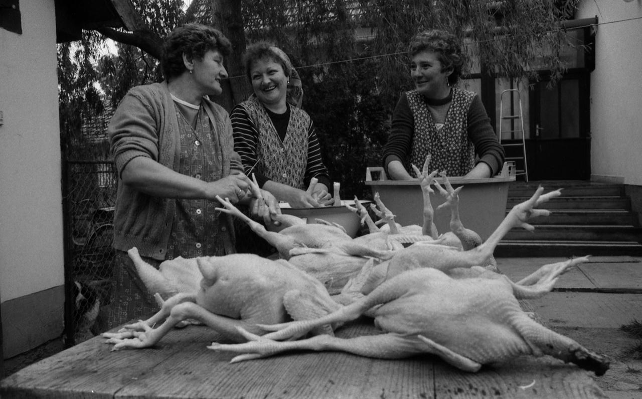 Csirkebontás Óföldeákon, talán lagzi lesz. A hatvanas évektől, és főleg az Új Gazdasági Mechanizmus 1968-as meghirdetése után a háztájizással a magángazdaság tág terepet kapott az agráriumban. A szovjet kolhozmodelltől eltérő, a szövetkezeti tulajdonra és a gazdálkodók érdekeltté tételére építő konstrukció összességében sikeres különutas politika volt, a mezőgazdasági beruházások nőttek, és a falusi társadalom annak ellenére tudott gyarapodni, hogy a településpolitika a nagyobb településeket favorizálta.