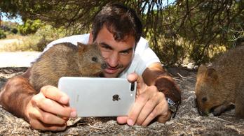 A szelfiző turisták veszélyt jelentenek a vadon élő állatokra is