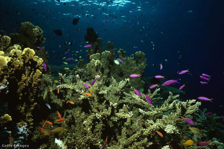 A Nagy Korallzátony az óceánok egyik legnagyobb biodiverzitású tája, egyúttal legérzékenyebb is a klímaváltozásra
