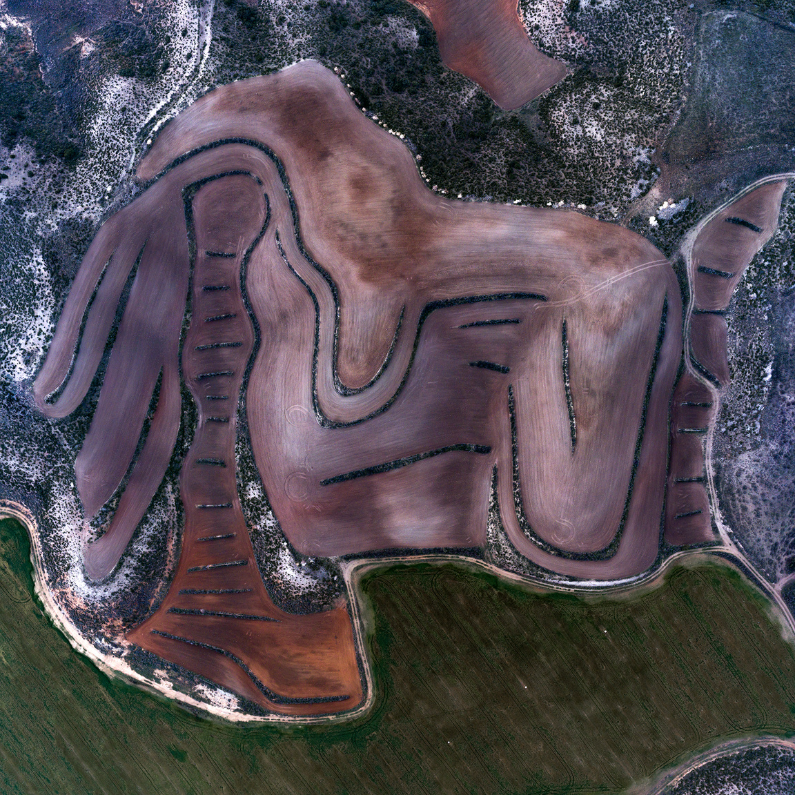El MeridianoEsti órákban fotózott frissen művelt búzamező absztrakt formái. A szintek közötti lépcsők a légi perspektívának köszönhetően vonallá változtak és egyben a víz megtartásában is fontos szerepet játszanak. Érdekesség, hogy a greenwichi délkör a kép bal harmadán található tekebábut szeli át.Candasnos közelében, Huesca, Spanyolország. 2018.12.28.A képen látható terület szélessége: 413 m.