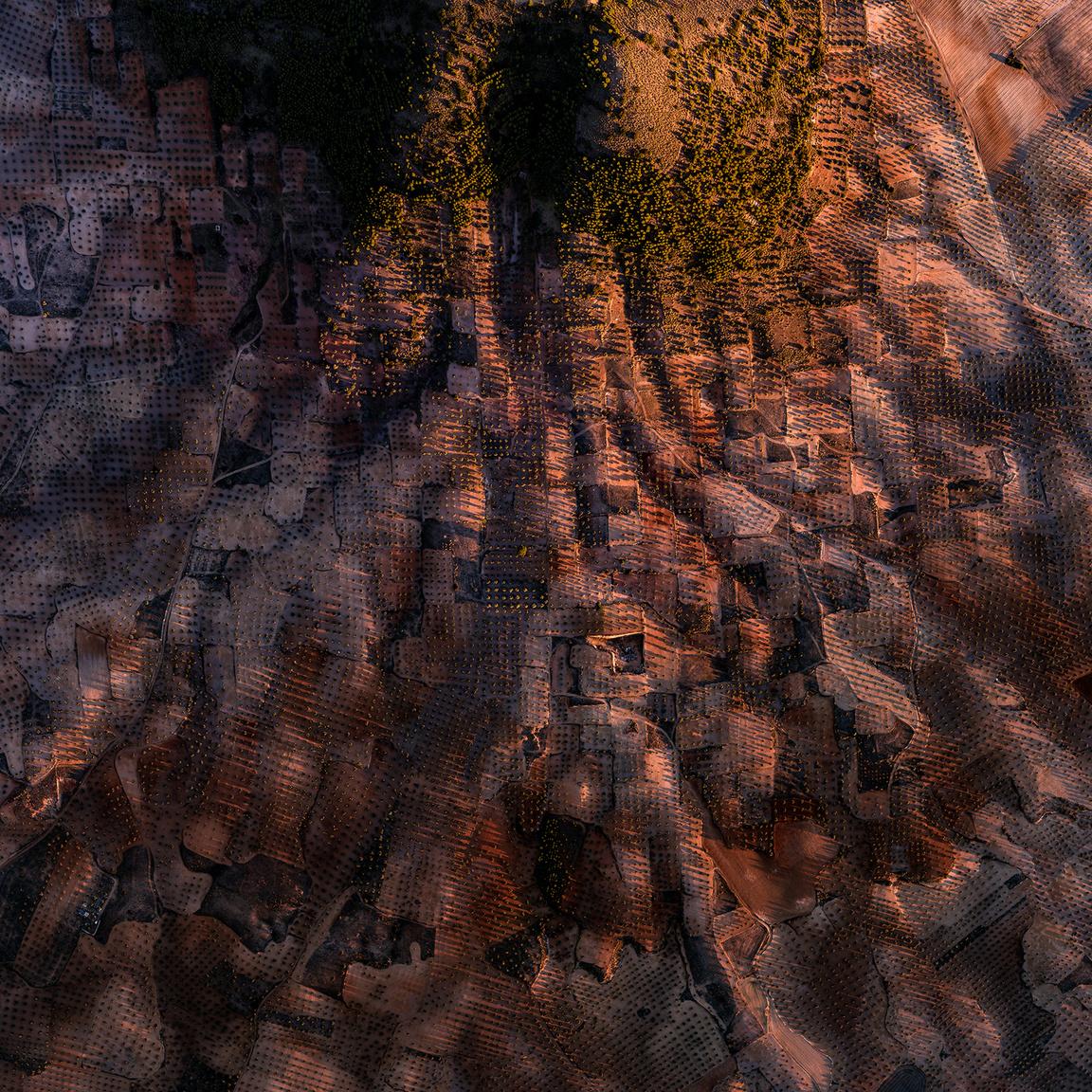 Sierra del RomeralApró parcellák tele olajfákkal a Romeral-hegy lankáin, amelyeket megvilágítanak a nyugvó nap utolsó, és egyben a 2018-as év legutolsó sugarai.El Romeral, Toledo, Spanyolország. 2018.12.31.A képen látható terület szélessége: 1584 m.