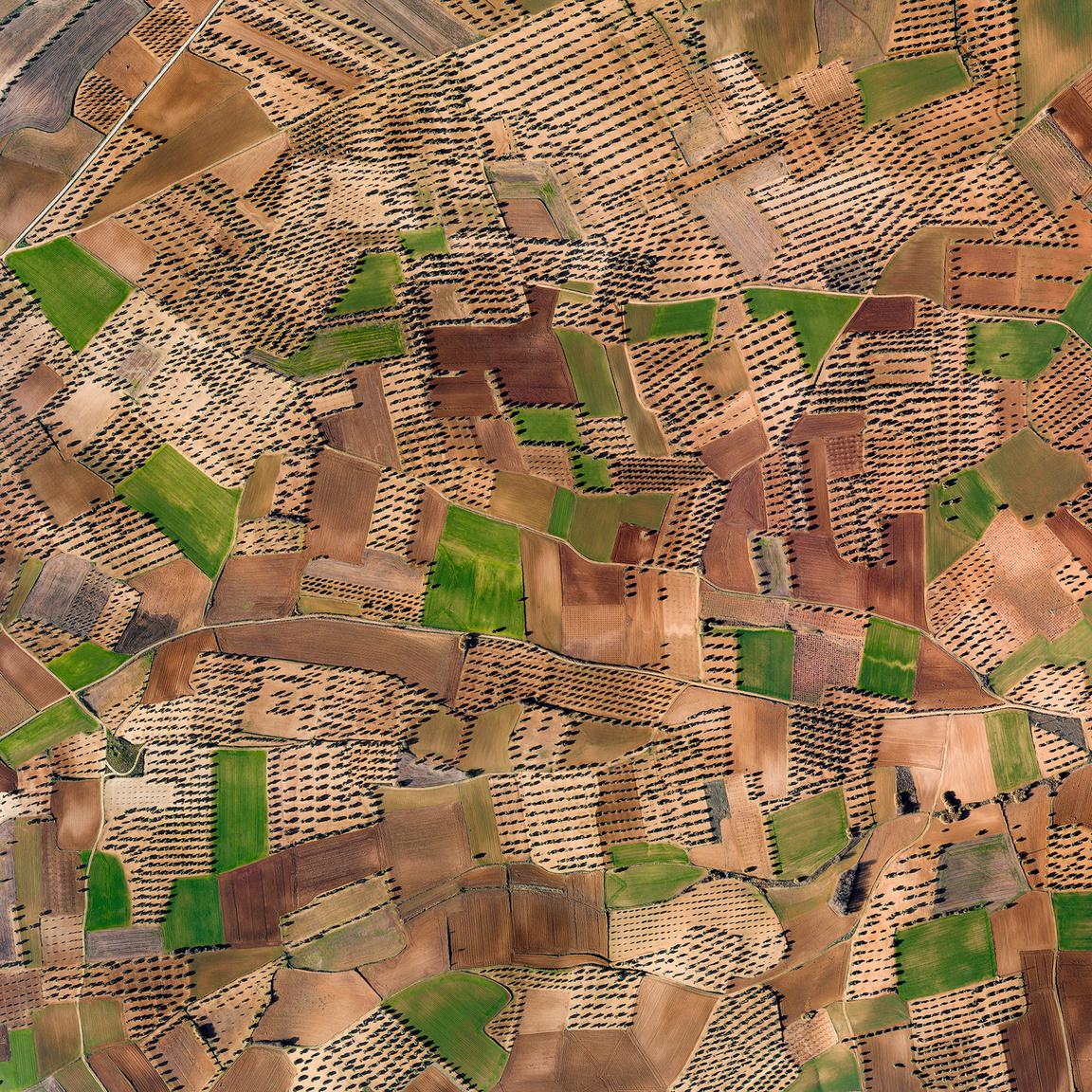 ValdecarábanosOlajfa ültetvények és búzamezők mintázata Madridtól délre, a Cedrón folyó vízgyűjtő területén, ahol ez a két kultúra képes átvészelni a nagy szárazságot és a magas nyári hőmérsékletet.Huerta de Valdecarábanos, Toledo, Spanyolország. 2018.12.31.A képen látható terület szélessége: 1400 m.