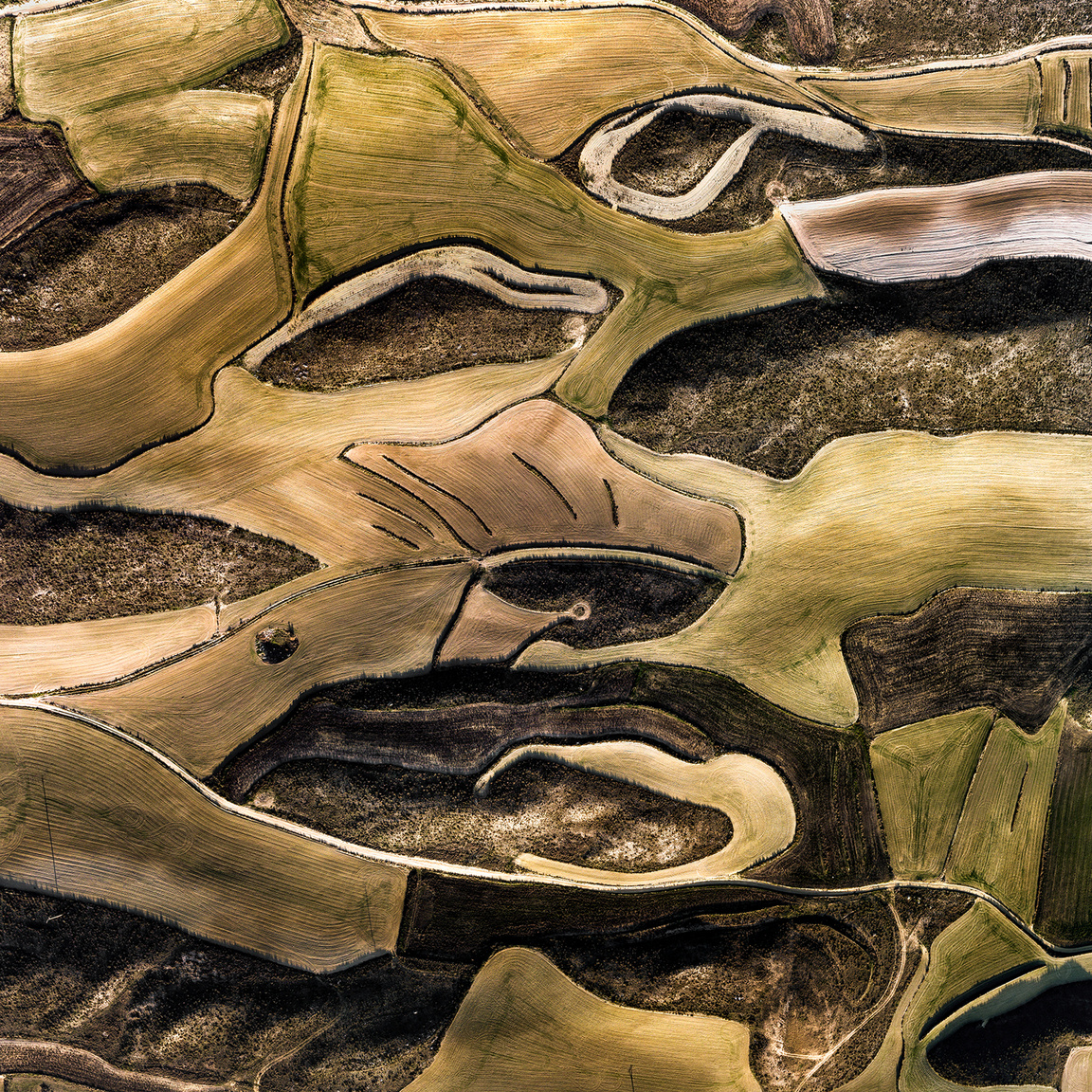 Val de SondaSötét, száraz növényzettel borított dombok között megmunkált mezők vannak, ahol frissen kibújt búzaszálak zöldellnek. A vonalaknak látszó kőfalak tartják meg a vizet.Villamayor de Gállego, Zaragoza, Spanyolország. 2018.12.30.A képen látható terület szélessége: 680 m.