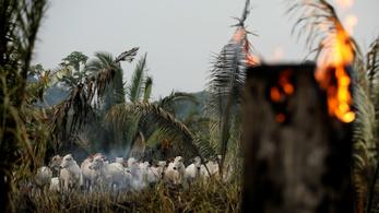 Továbbra sem lassul a brazil esőerdők pusztulása
