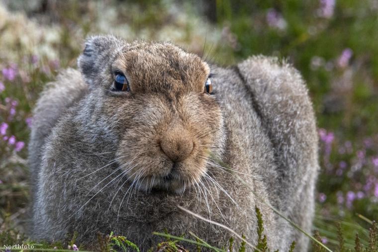 tk3s sn grumpy hare 3