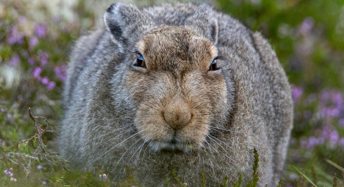 tk3s sn grumpy hare 2