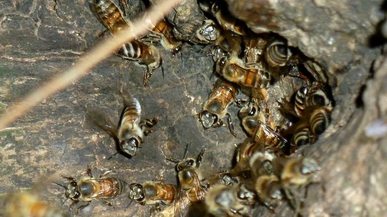 Most akkor lerohanják a világot a gyilkos méhek, vagy nem?