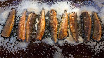 A boltok, éttermek harmada ismeretlen eredetű halat szolgált fel a nyáron