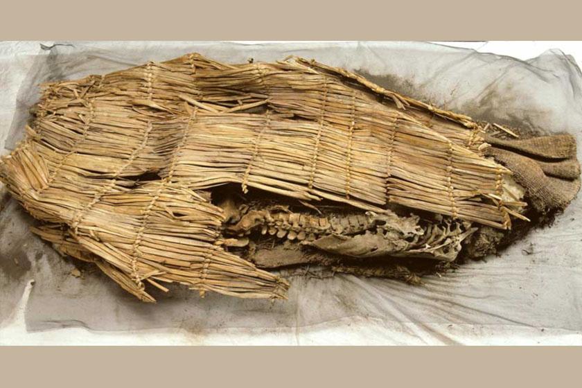 A múmiát nádszőnyegbe és nyúlbőrbe takarva találták meg a barlangban.