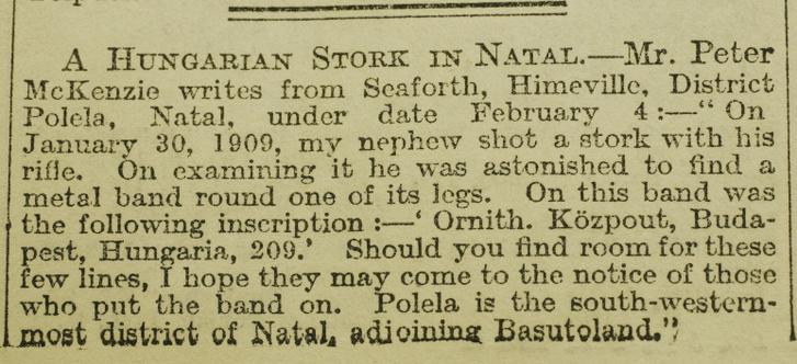 A Dél-Afrikában lelőtt magyar gólyáról szóló The Times-cikk 1909-ből