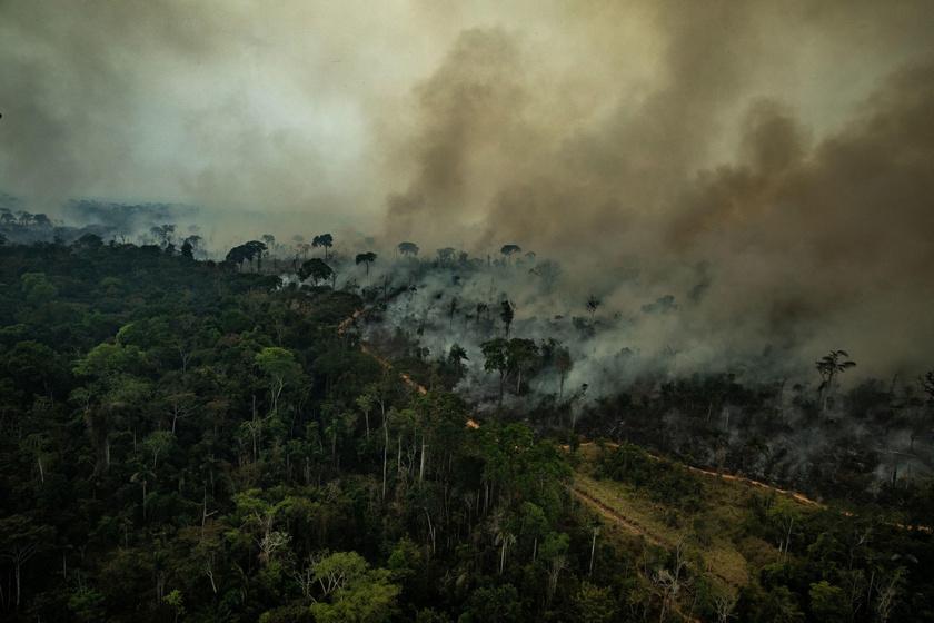 Az elmúlt időszakban a legnagyobb visszhangot a brazíliai esőerdőkben tomboló tüzek kapták, ami nem véletlen: idén augusztusban négyszer annyi tűz pusztított a kontinensen, mint a tavalyi év ugyanezen időszakában.
