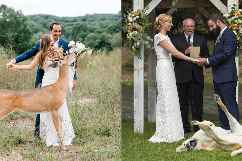 Tökéletes esküvői fotókat akartak, de széttrollkodták az állatok az egészet: igen vicces lett a végeredmény