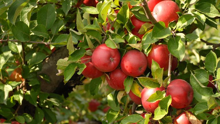 Megint jön egy alma, ami felforgat egy teljes iparágat