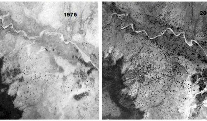 A Nigerben lévő fák 1975-ben és 2003-ban.