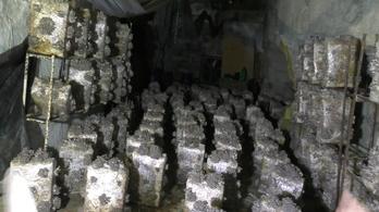 Bérelt barlangban termesztette a kannabiszt egy budai férfi