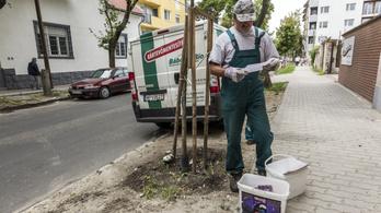 A bíróság szerint nem volt rendben a fővárosi patkányirtó tender