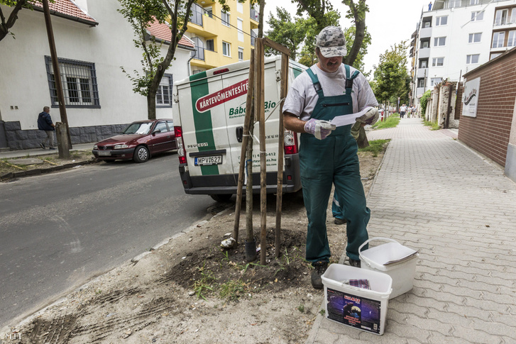 A Bábolna Bio Kártevõirtó és Szolgáltató Kft. patkányirtási részlegének munkatársa a fõvárosi XIII. kerületi Jász utcában 2016. augusztus 11-én.