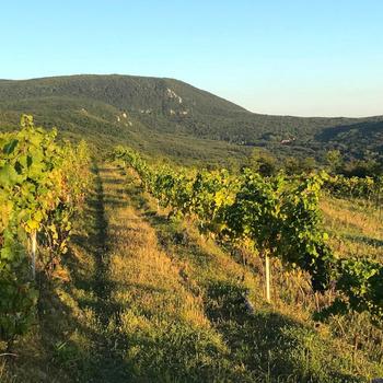Húszéves pezsgő volt a bortúra csúcsa: ilyen a Neszmélyi Borvidék