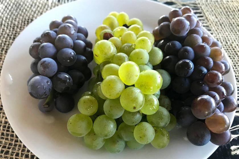 tányér szőlő