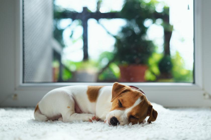Miről álmodnak a kutyák? Meglepő választ mondott a pszichológus
