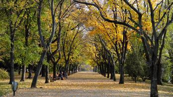 Jövő héten megérkezik az ősz