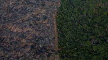 Az emberi szennyezés miatt egyre zöldebb a Föld