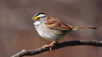 A madarakat is mérgezik a méhpusztulást okozó növényvédő szerek
