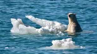 Tényleg ugyanazok a tudósok riogatnak felmelegedéssel, akik a 70-es években jégkorszakot jósoltak?
