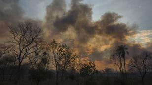 Közel két és fél millió hektár égett le Bolíviában az Amazonas mentén
